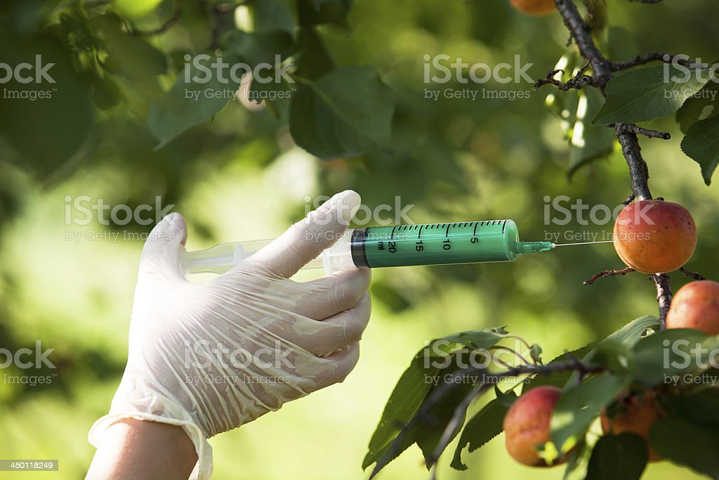 Needle and syringe injecting representing modified fruit stock photo