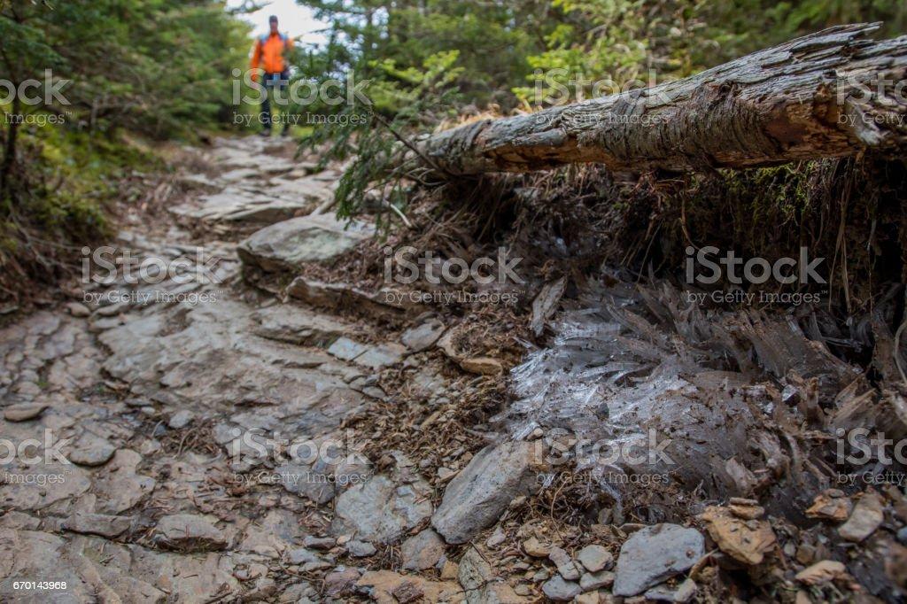 Needle Ice Along Side of Trail stock photo