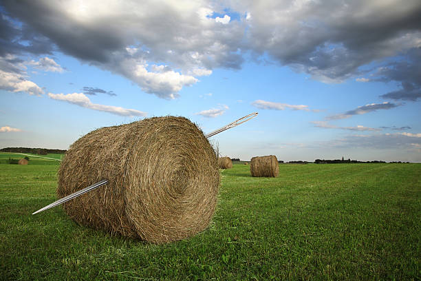 Needle in a Haystack This is a conceptual photo created with two images relating to the saying