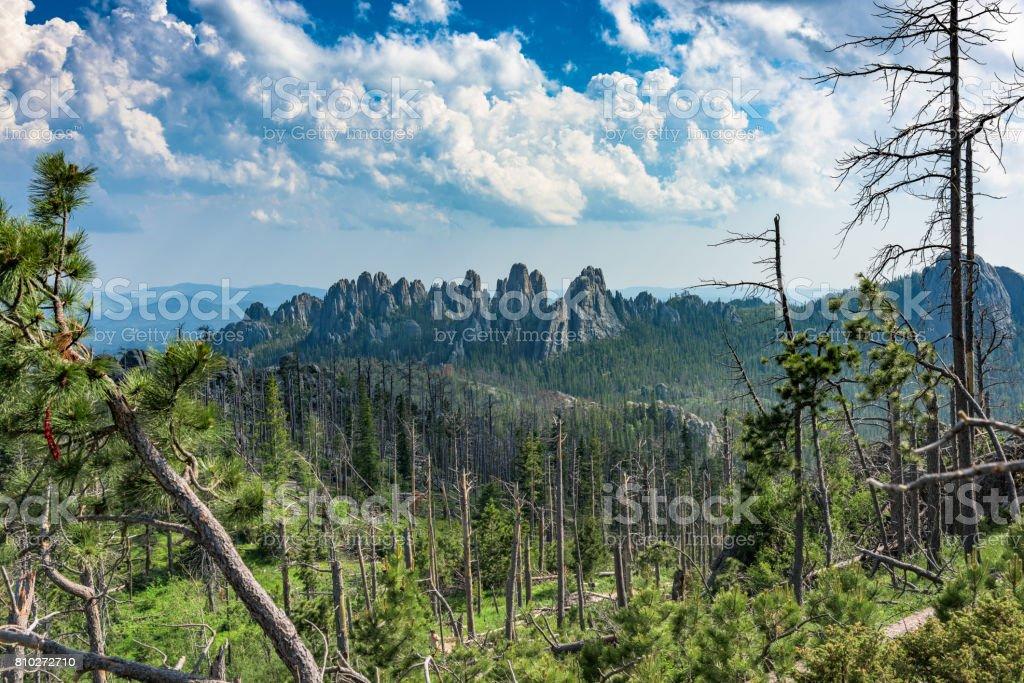 Needles of Black Elk National Forest (Explored) stock photo