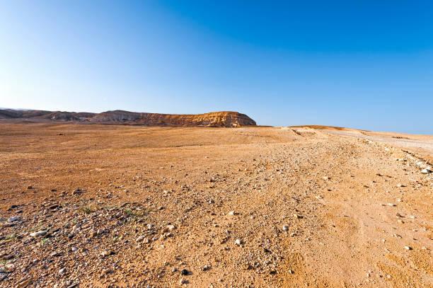 negev desert in israel - dziki obszar zdjęcia i obrazy z banku zdjęć