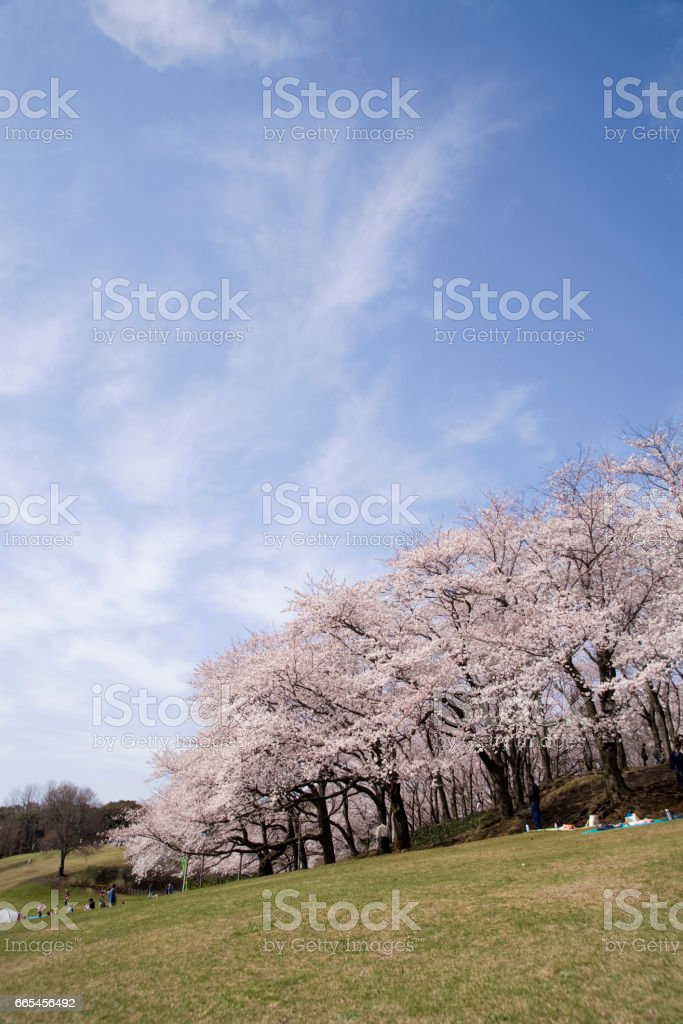 Negishi forest park stock photo