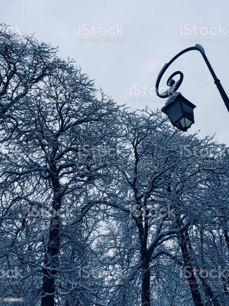 Neige sur les arbres - Photo
