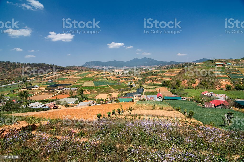 Neighborhood of Dalat, Vietnam. Vegetable and flower fields, beautiful landscape stock photo