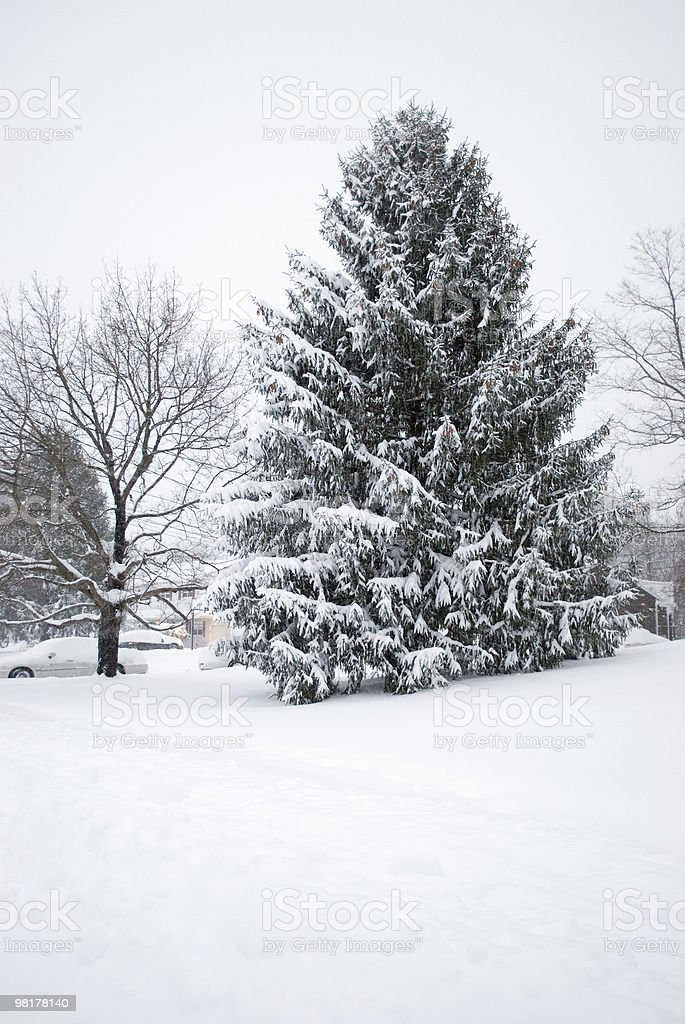 Neighborhood Snowy Pine royalty-free stock photo
