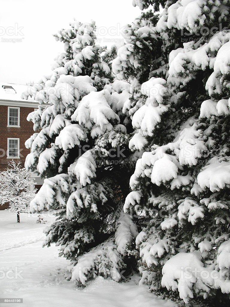 Neighborhood Winter Trees royalty-free stock photo