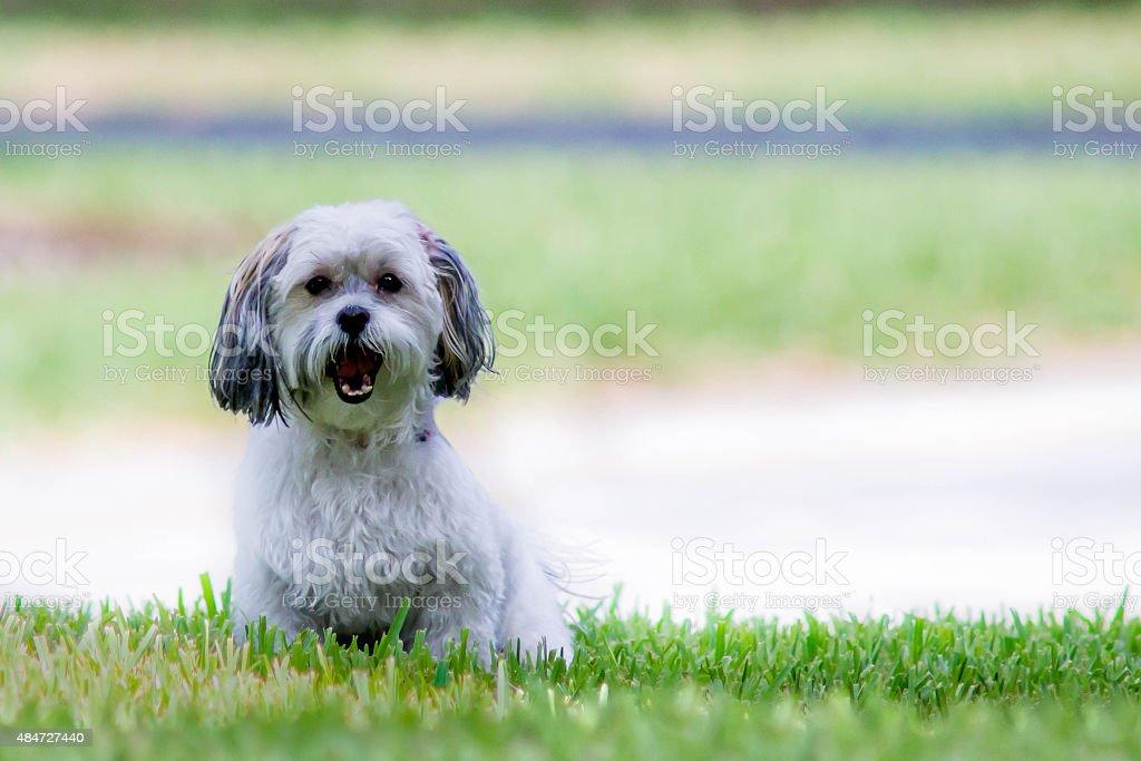 Neighbors Mean Dog stock photo