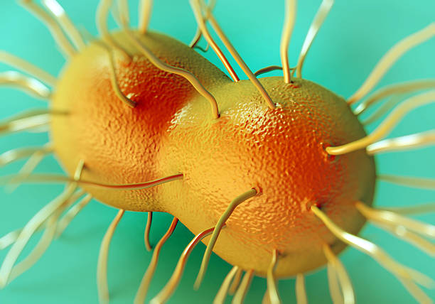 Neisseria gonorrhoeae bacteria stock photo