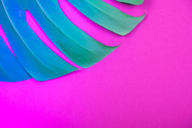 Neon farbige tropische Pflanze grün Monstera Blatt auf sauren Kunststoff rosa Hintergrund. – Foto
