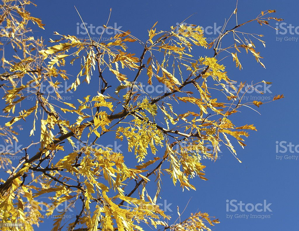 Neon Fall Colors royalty-free stock photo