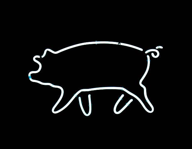 Neon pig sign stok fotoğrafı