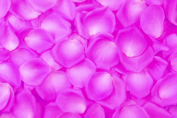 Hintergrund der rosa Rosenblätter. Top View. – Foto