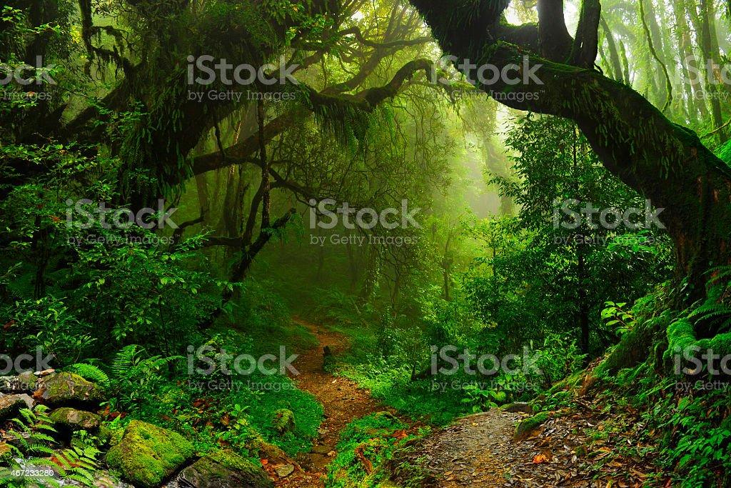 Nepal jungle - foto de stock