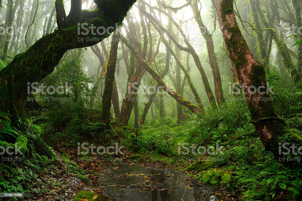 Nepal jungle stock photo