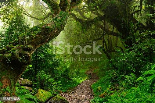 istock Nepal jungle 578571638