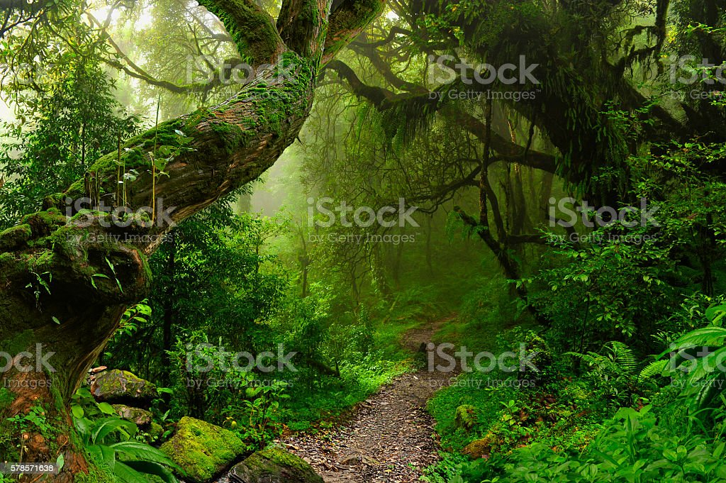 Nepal jungle stock photo