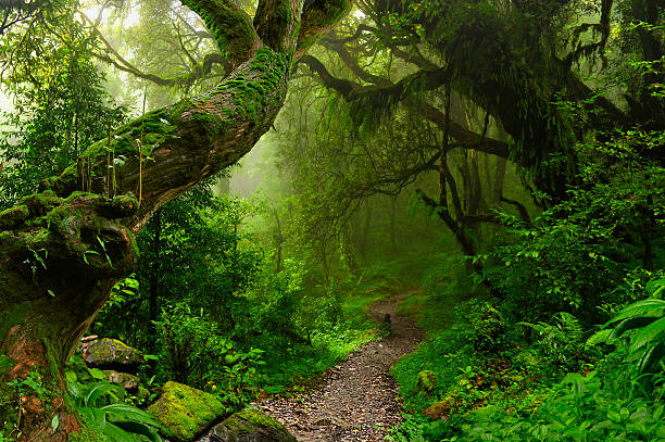 Genesis Nature Blog: Rainforests |Tropical Rainforest Photography