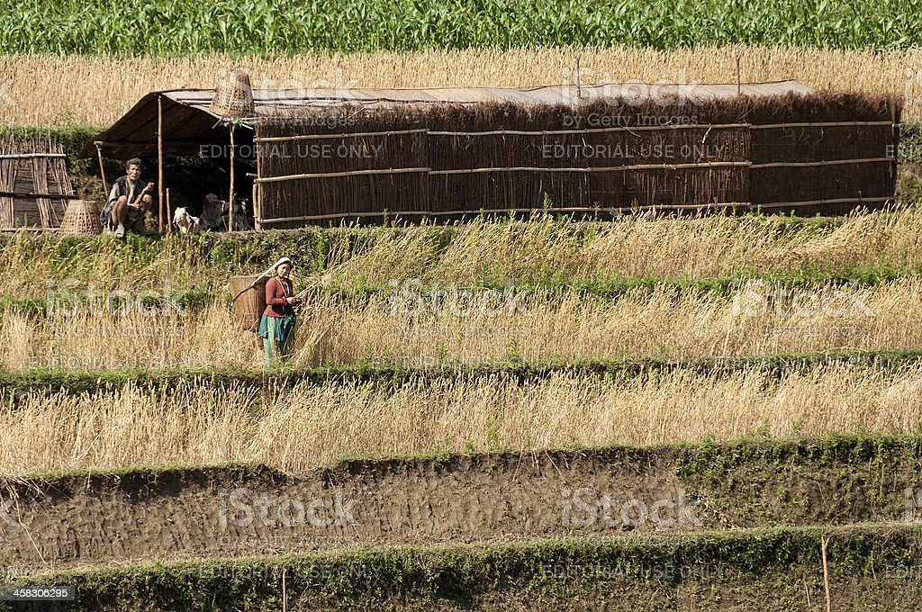 Nepalese farmers royalty-free stock photo