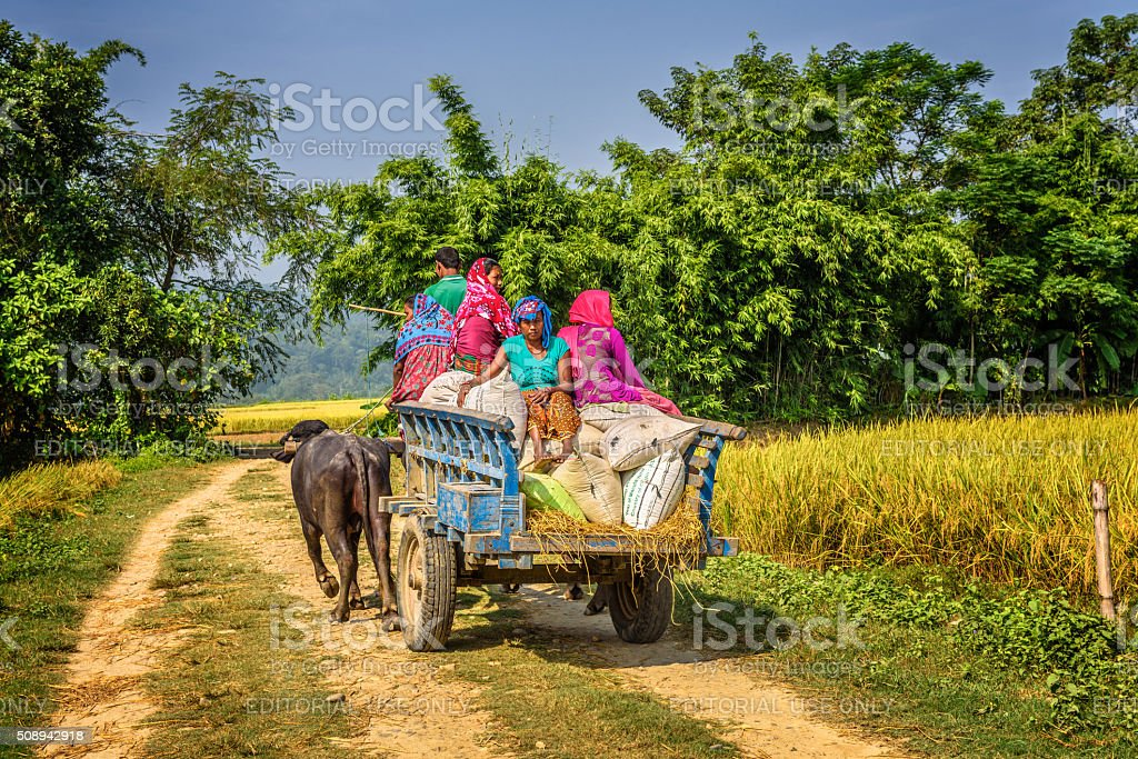 Nepalese people travelling on a wooden cart attached stock photo