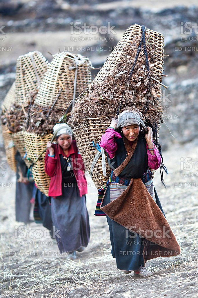 Nepalese women working stock photo