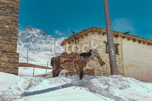 Mountain, Mountain Range, Snow, Nepal, Himalayas, horse
