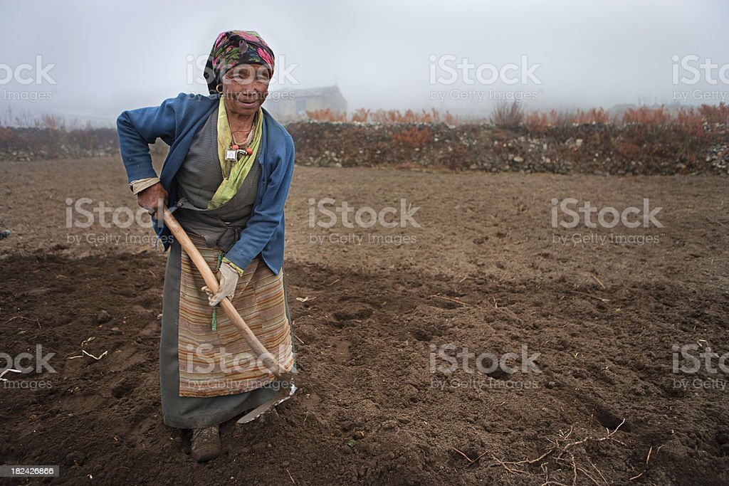 Nepali woman working in the field stock photo