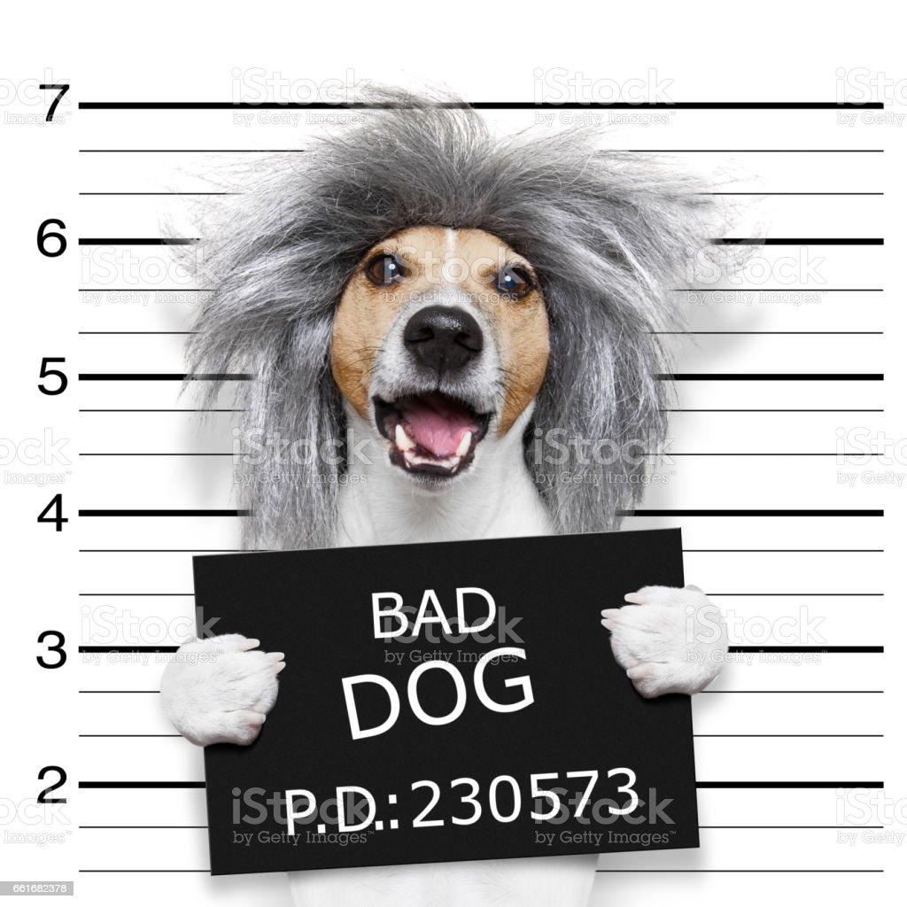 nerd silly dog mugshot stock photo