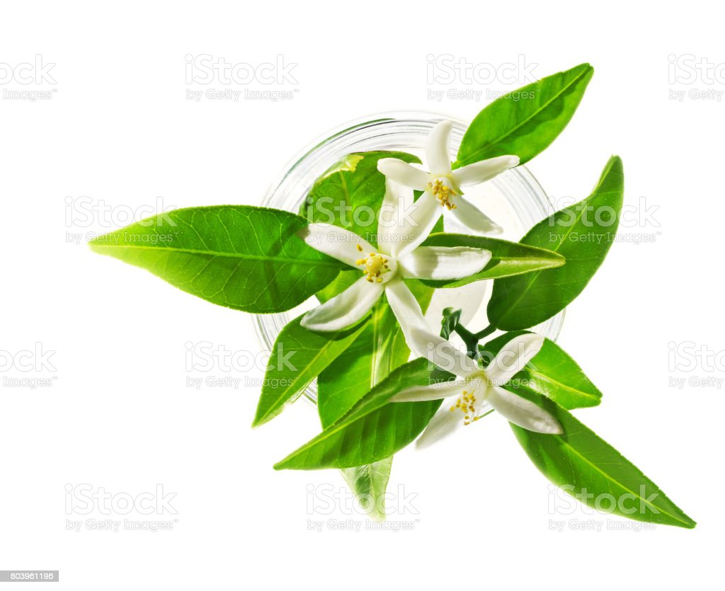 Neroli blossoms in glass, isolated on white, beauty spa concept. stock photo