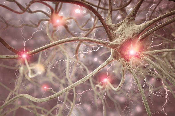 Nerve Cell 3D Biomedical Illustration Interconnected neurons transferring information with electrical pulses. 3D rendering high quality. axon terminal stock pictures, royalty-free photos & images