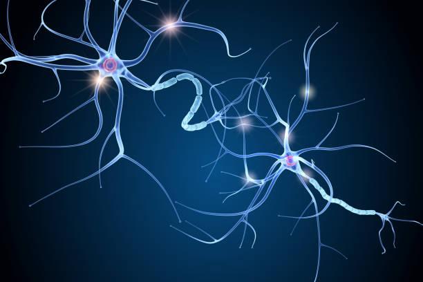 nervenzelle-anatomie im detail. 3d illustration - axon stock-fotos und bilder