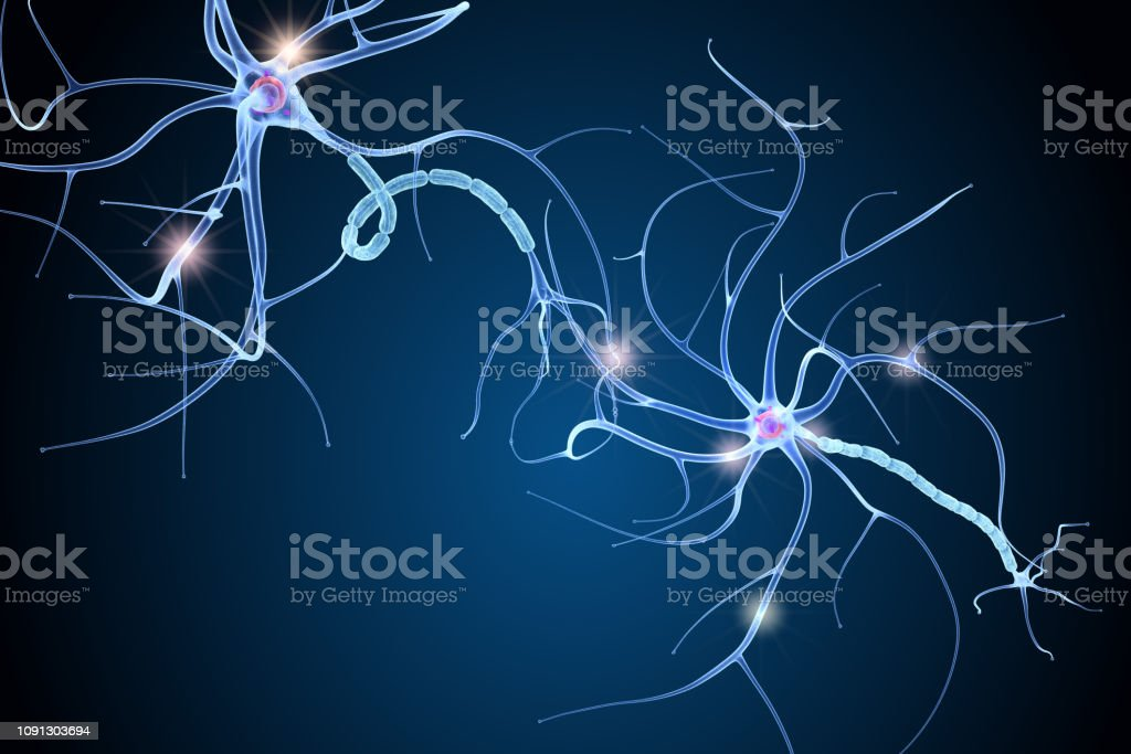 Nerve cell anatomy in details. 3D illustration Nerve cell anatomy in details. 3D illustration Anatomy Stock Photo