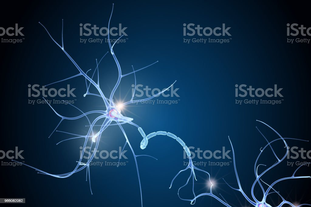 Nerve cell anatomy in details. 3D illustration - Royalty-free Anatomy Stock Photo