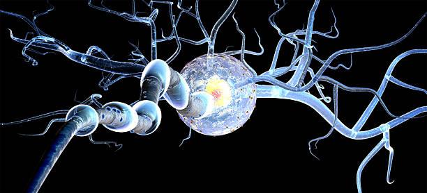 Célula nerviosa aislado sobre fondo negro - foto de stock