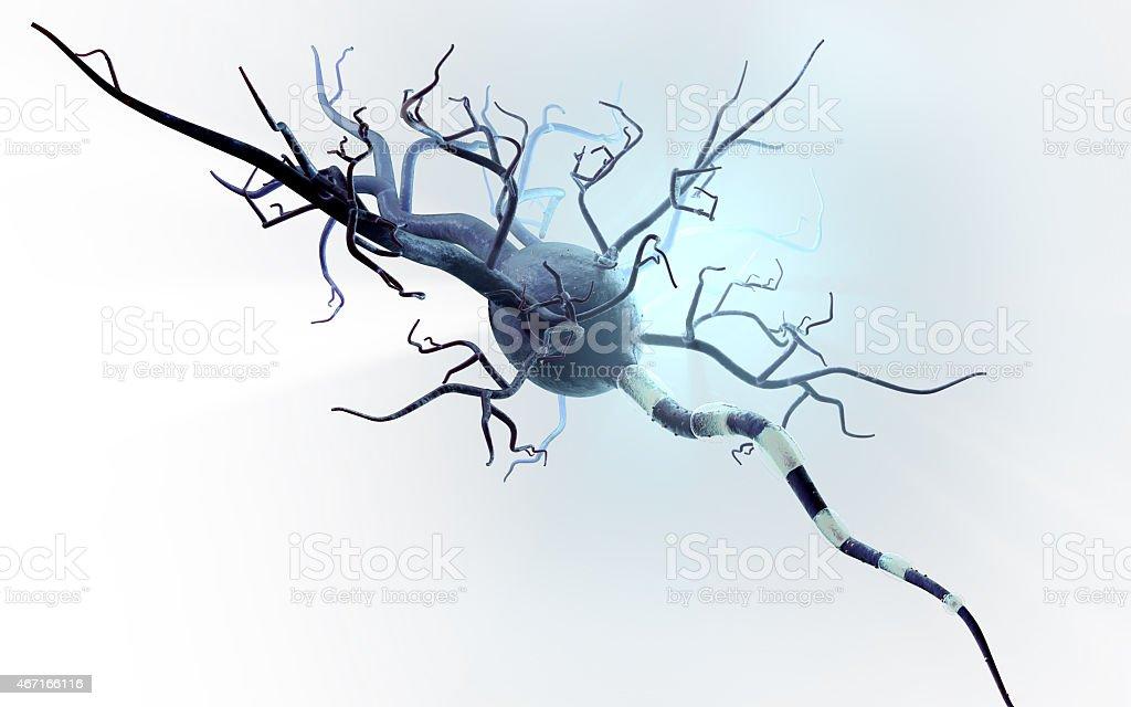 Célula nerviosa aislado sobre fondo blanco - foto de stock