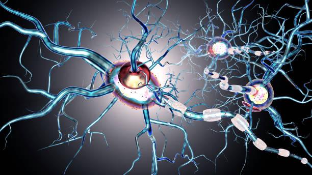 Nervenzellen, Konzept für Neurodegenerative und neurologische Erkrankungen, Tumoren, Gehirn-Chirurgie. 3D-Rendering – Foto