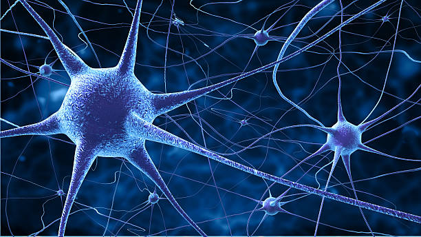 nerve cells - nerve cell stock photos and pictures