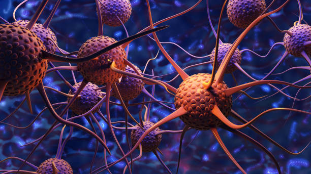Nerve cells Nerve cells.3d rendering autoreceptor stock pictures, royalty-free photos & images