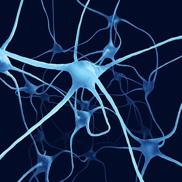 Nerve Cells XL+ Nerve cells. motor neuron stock pictures, royalty-free photos & images