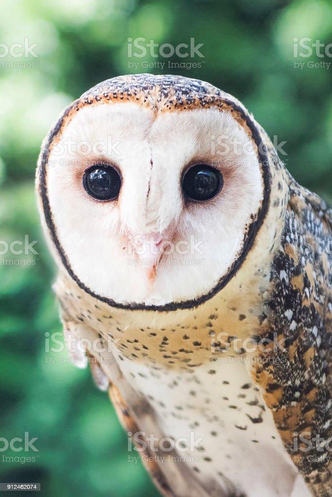 Nervous owl stock photo