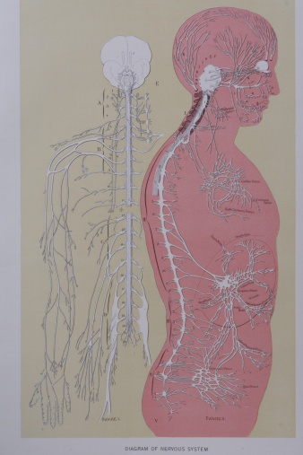 Vintage medical diagram stock photos