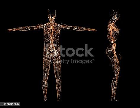 istock Nervous system 937685800