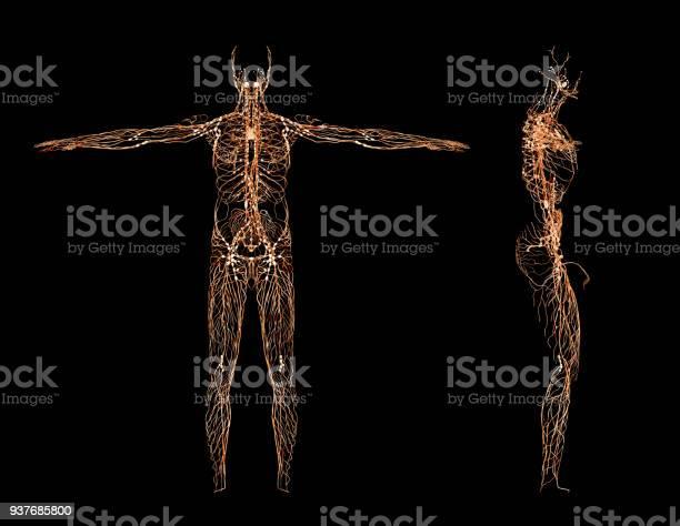 Nervous system picture id937685800?b=1&k=6&m=937685800&s=612x612&h=1born9to5 9i0lmsfvlj8za a m sm5 1rxoi0p8 l4=
