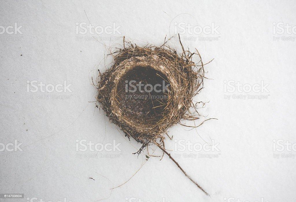Nest in Snow stock photo