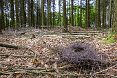 Nest lying on forest ground