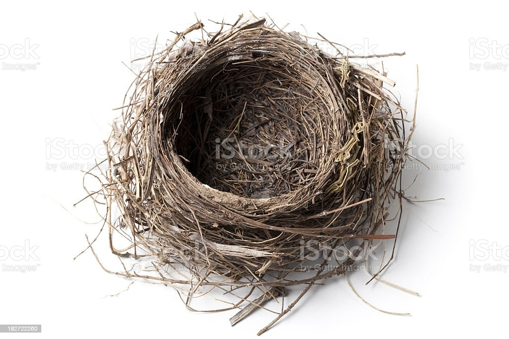 Nest stock photo