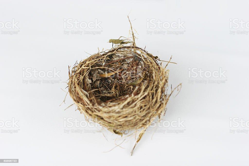 Nest foto de stock libre de derechos