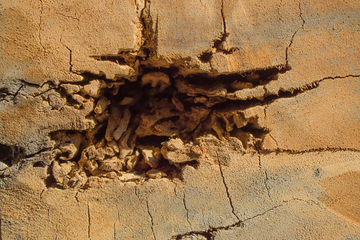 Nest termite on decay wood poles. Copy space for text.