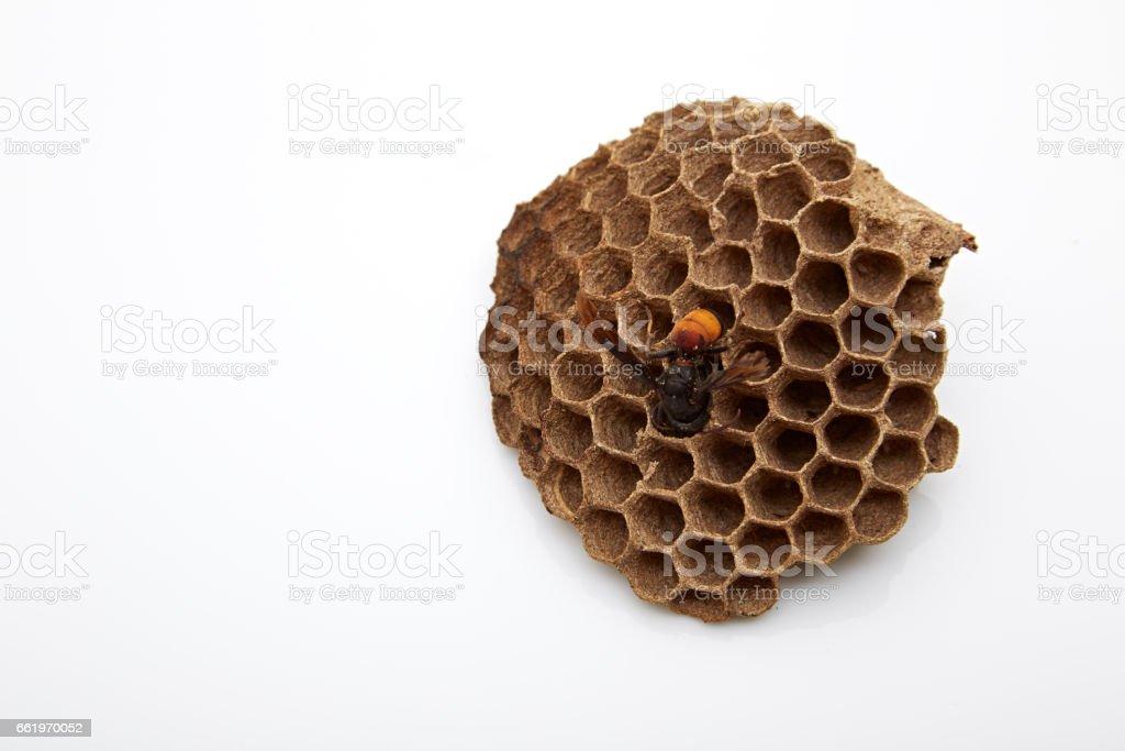 nest, wasp royalty-free stock photo