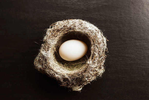 Nest with an egg stock photo