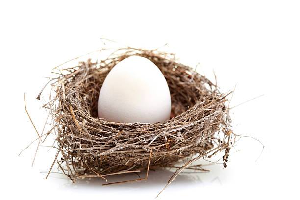 Nest with Egg stock photo
